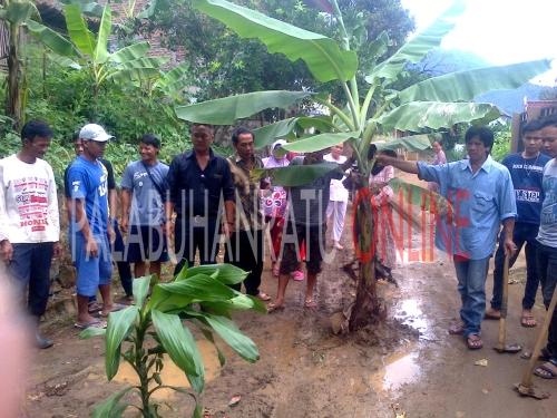 Warga Kp.Pojok Ds. Cimanggu melakukan penanaman pohon pisang ditengah jalan akibat kecewa dengan pemerintah desa dan pemerintah daerah (Photo : Palabuhanratu Online)